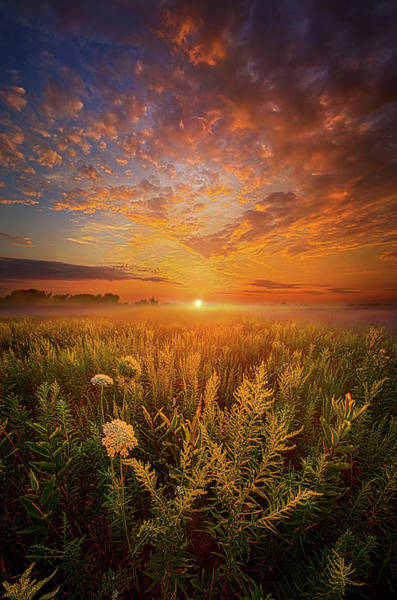 Photograph - Sometimes Darkness Can Show You The Light by Phil Koch