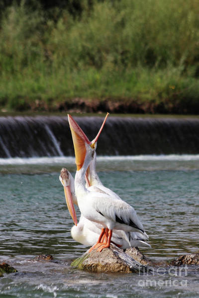 Lethbridge Photograph - Sometimes You Just Have To Yawn by Alyce Taylor