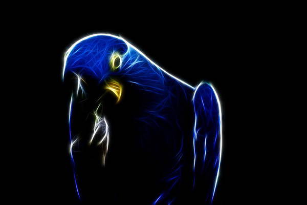 Hyacinth Macaw Photograph - Somewhat Blue by Douglas Barnard