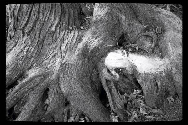 Photograph - Somewhere On Gilligan's Island by Mario MJ Perron