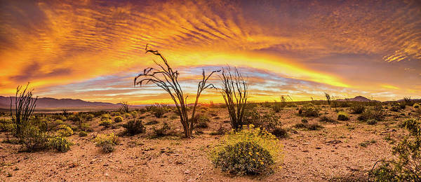 Desert Plant Photograph - Somewhere Over by Peter Tellone