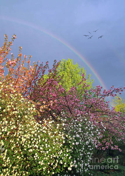 Photograph - Somewhere Over The Rainbow by Geoff Crego