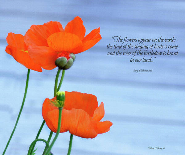 Diane Berry Wall Art - Painting - Song Of Solomon 2 by Diane E Berry