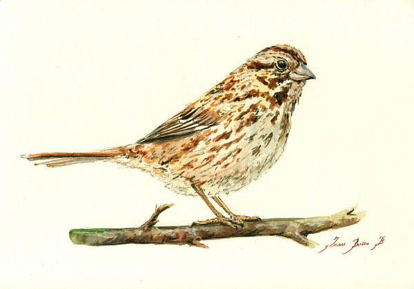 Wall Art - Painting - Song Sparrow by Juan  Bosco