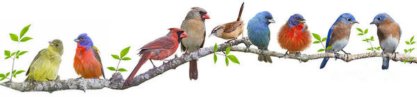 Wall Art - Photograph - Songbirds On A Leafy Branch by Bonnie Barry