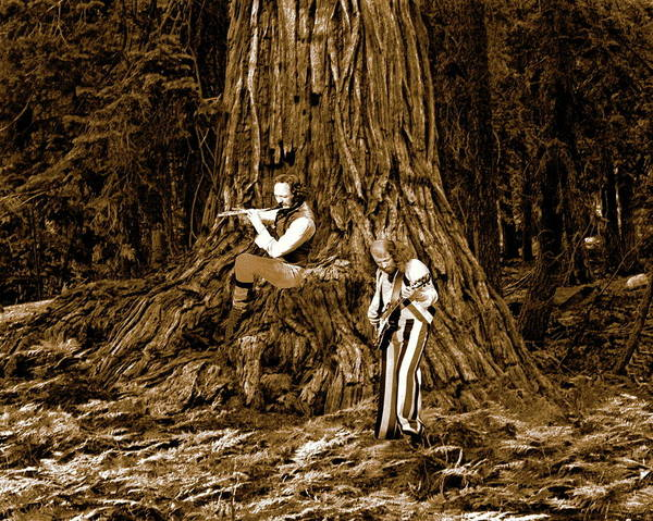 Songs In The Woods 2 Art Print