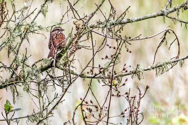 Photograph - Songster by Kate Brown