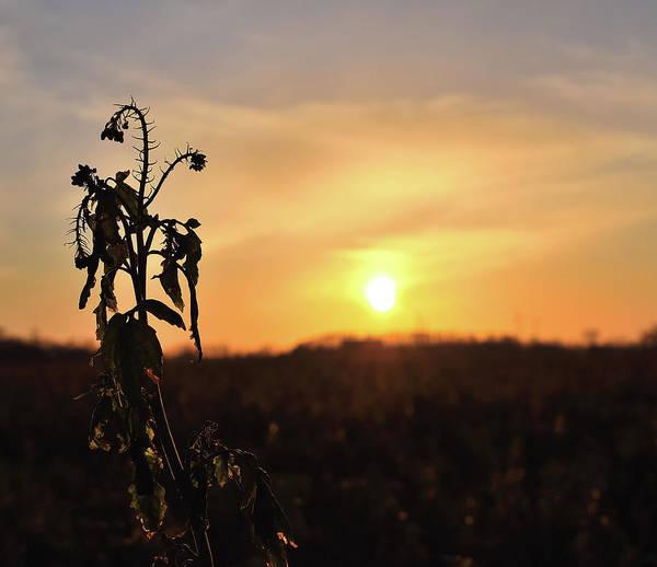 Photograph - Sonnenuntergang by Scimitarable