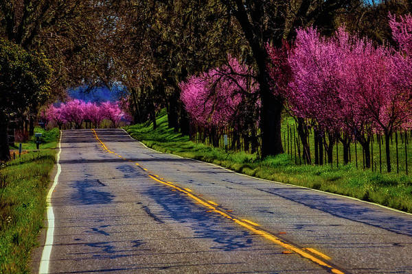 Back Road Photograph - Sonoma Country Road by Garry Gay