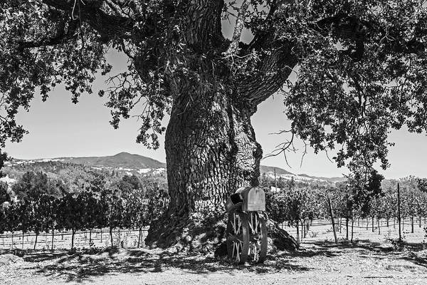 Photograph - Sonoma Valley Tree  Black And White by Toby McGuire