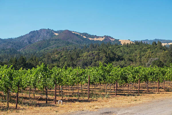 Photograph - Sonoma Valley Vineyards Northern Ca by Toby McGuire