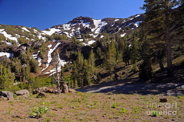 Photograph - Sonora Pass Area by Cindy Murphy - NightVisions