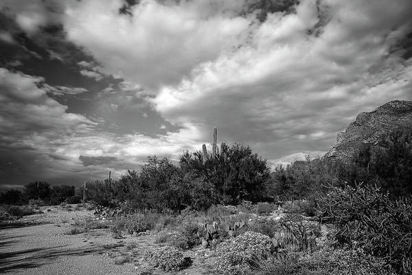 Photograph - Sonoran Afternoon H10 by Mark Myhaver