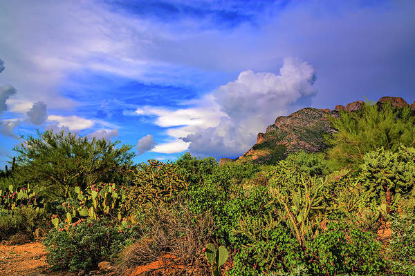 Photograph - Sonoran Afternoon H11 by Mark Myhaver