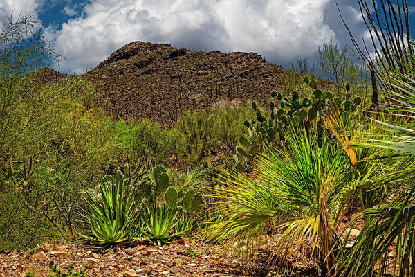 Photograph - Sonoran Desert Blend H1850 by Mark Myhaver