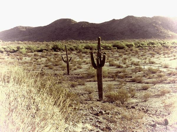 Photograph - Sonoran Desert Dreamscape 2 by Judy Kennedy