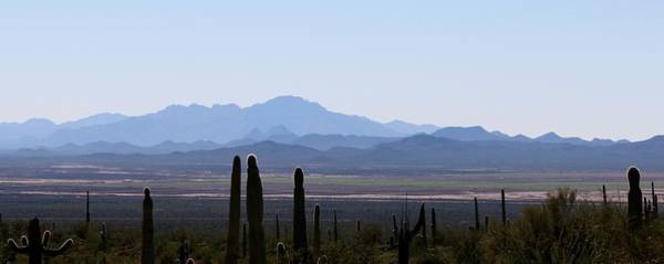 Photograph - Sonoran Desert Landscape  by Christy Pooschke