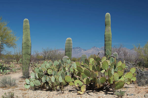 Wall Art - Photograph - Sonoran Desert by Rich Leighton