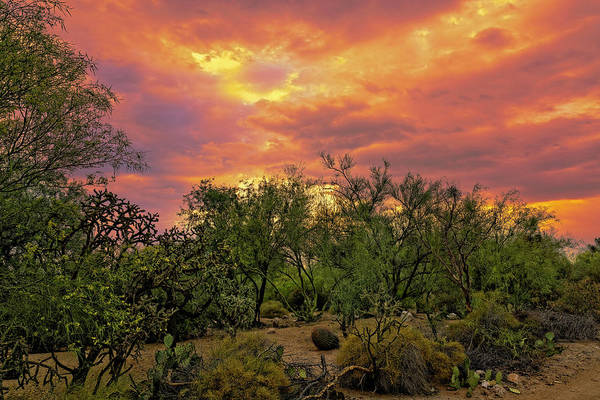 Photograph - Sonoran Desert Sunset H44 by Mark Myhaver