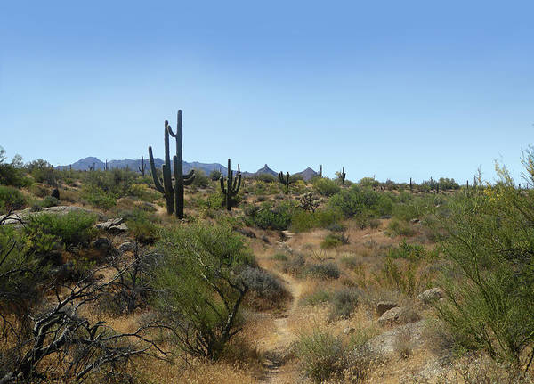 Tramonto Photograph - Sonoran Desert Trail by Gordon Beck