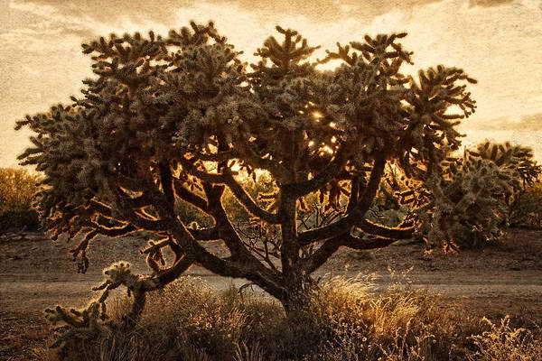 Photograph - Sonoran Glow by Leda Robertson