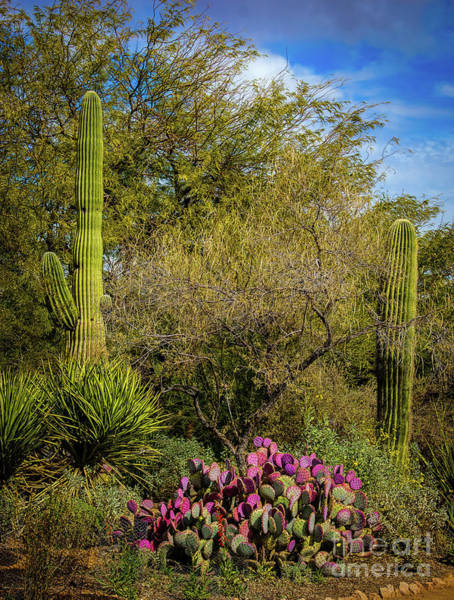 Photograph - Sonoran Holiday by Jon Burch Photography