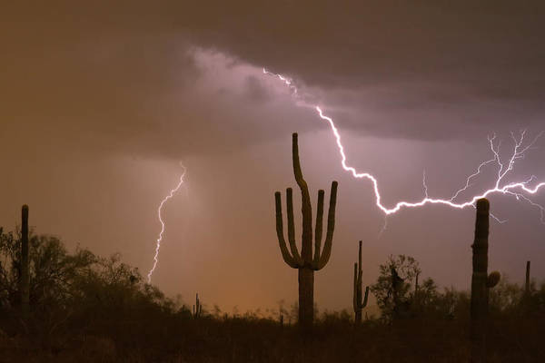 Photograph - Sonoran Saguaro Southwest Desert Lightning Strike  by James BO Insogna