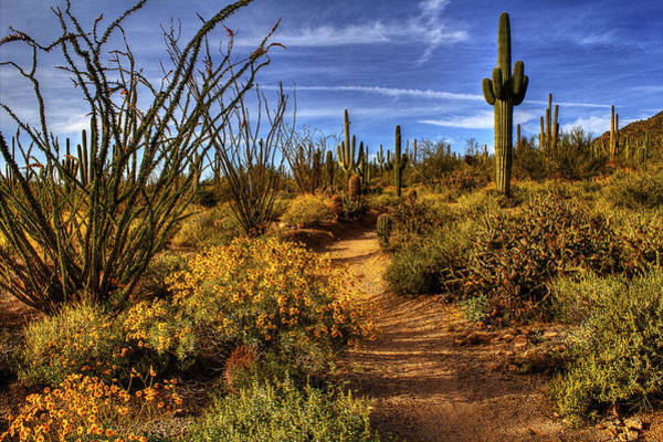 Photograph - Sonoran Spring 01 by Roger Passman
