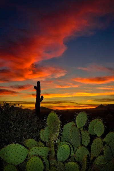 Photograph - Sonoran Sunset by Renee Sullivan