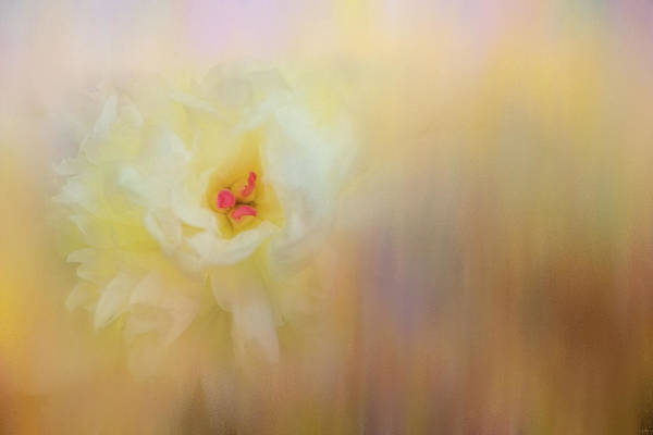 Photograph - Soon It Will Be Spring by Jai Johnson