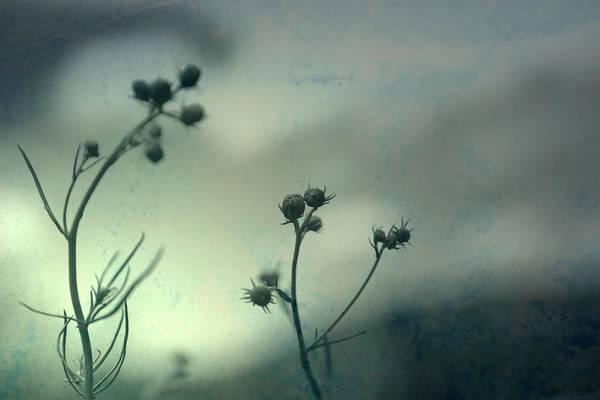 Photograph - Soon by Mark Ross