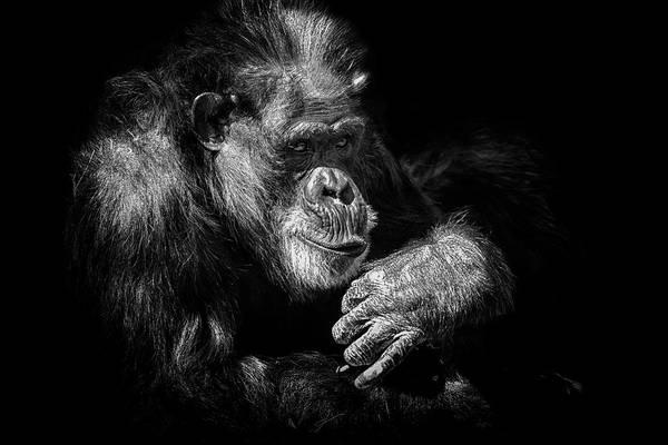 Photograph - Sooooo by Ghostwinds Photography
