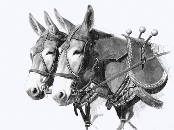 Draft Wall Art - Drawing - Sorrel Mule Team by Bethany Caskey