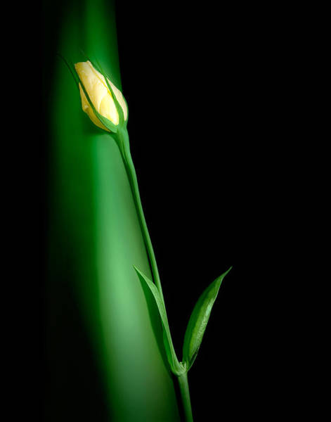 Rose Bud Photograph - Soul Mates by Tom Mc Nemar
