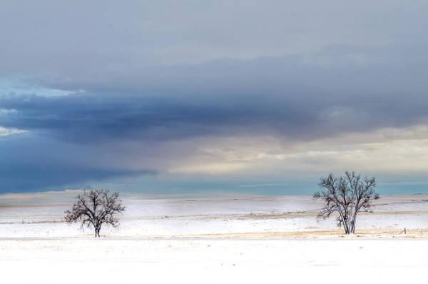 Wall Art - Photograph - Soul Trees by Landon Spady