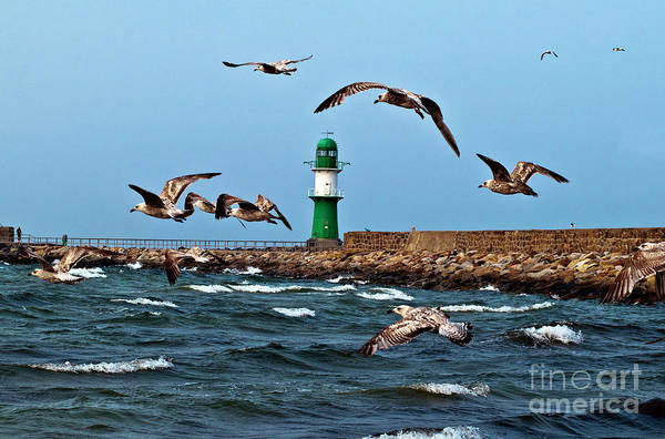Photograph - Sound Of Seagull by Silva Wischeropp