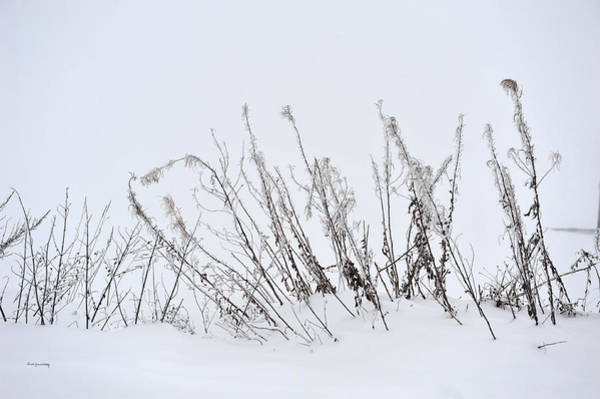 Photograph - Sound Of Silence by Randi Grace Nilsberg