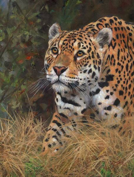 Jaguar Painting - South American Jaguar Big Cat by David Stribbling