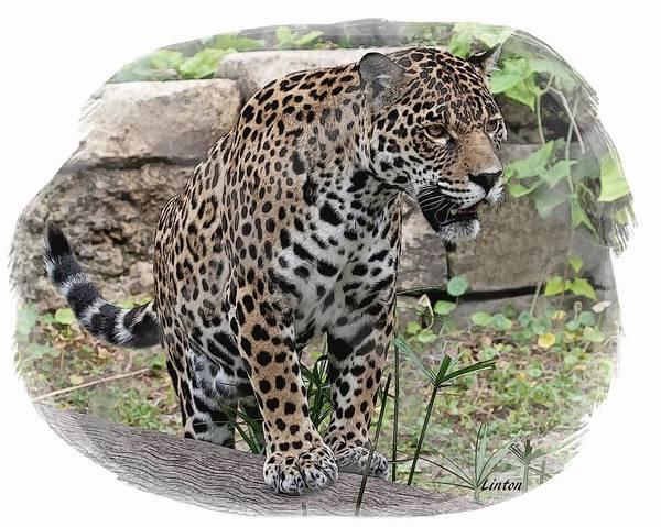 Digital Art - South American Jaguar by Larry Linton