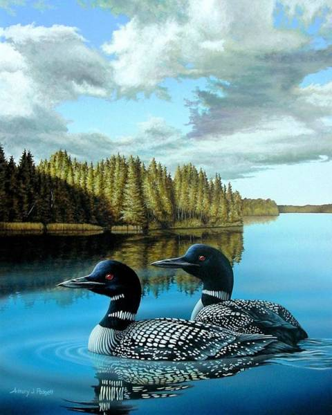 Loon Painting - South Bay Loons by Anthony J Padgett