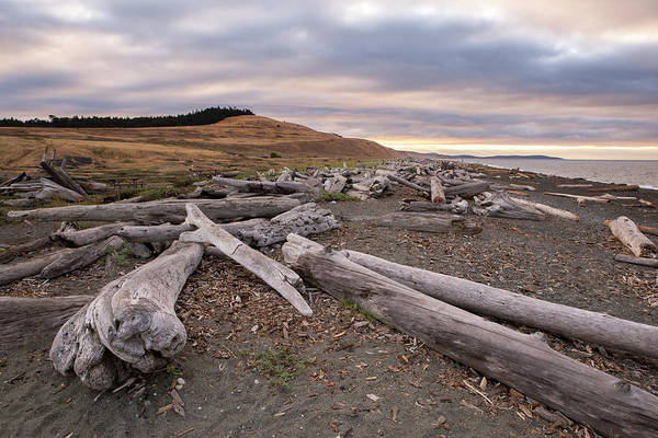 Wall Art - Photograph - South Beach, San Juan Island by Stephanie McDowell