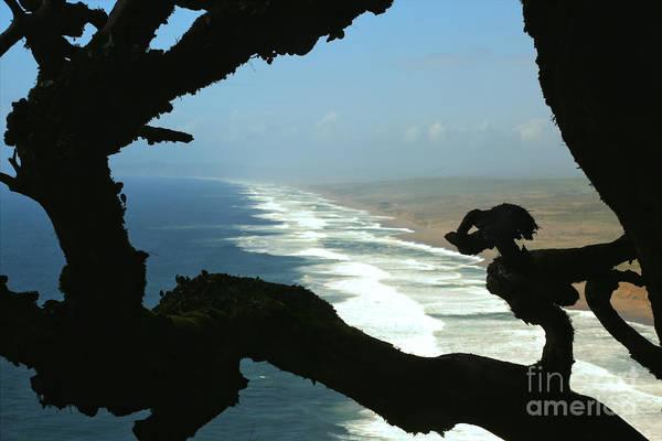 Photograph - South Beach Watchdog by Adam Jewell