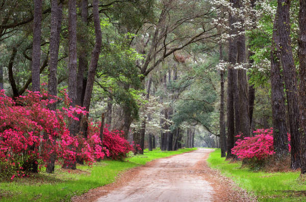 Lowcountry Photograph - South Carolina Lowcountry Spring Flowers Dirt Road Edisto Island Sc by Dave Allen