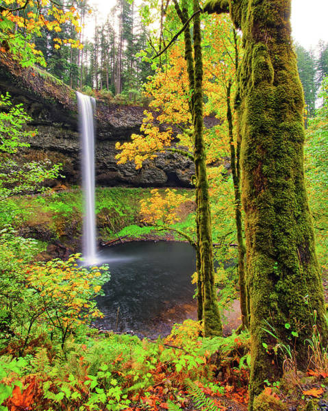 Photograph - South Silver Falls by Jedediah Hohf