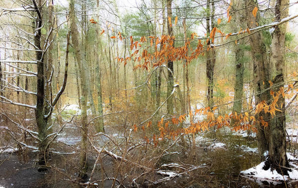 Photograph - South Woods by Matt Cegelis