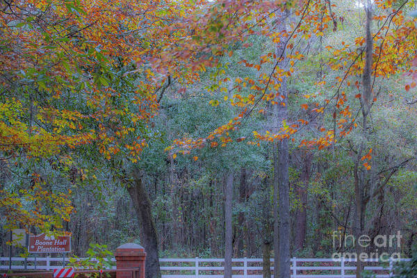 Photograph - Southern Autumn by Dale Powell