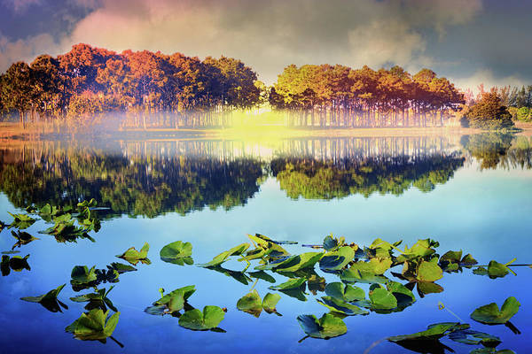 Okeeheelee Park Photograph - Southern Beauty by Debra and Dave Vanderlaan
