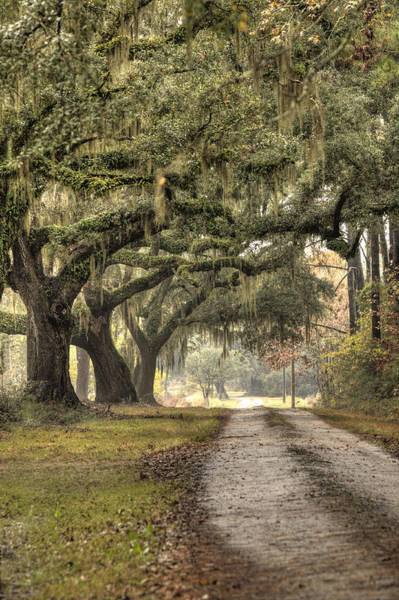 Southern Drive Live Oaks And Spanish Moss Art Print