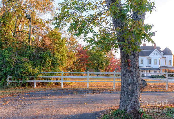 Photograph - Southern Fall by Andrea Anderegg