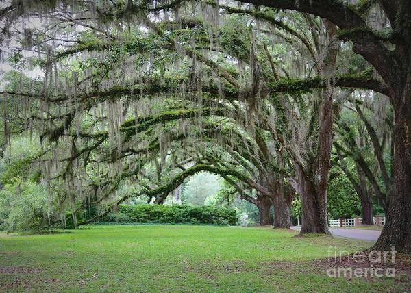 Photograph - Southern Grace by Carol Groenen